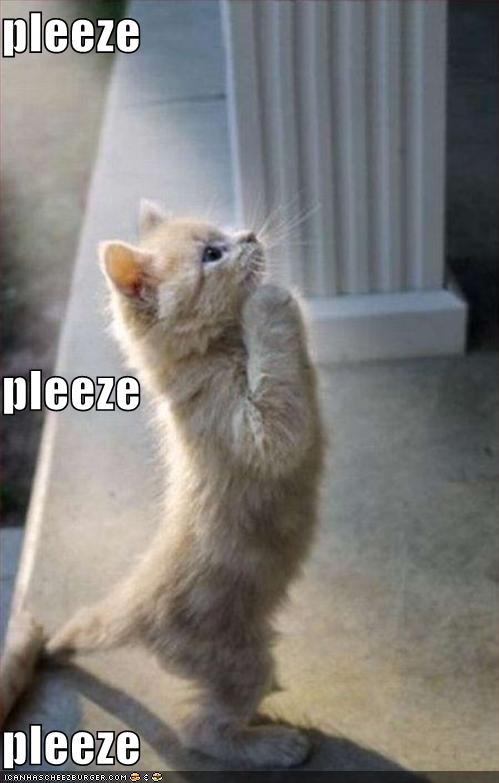 begging kitty