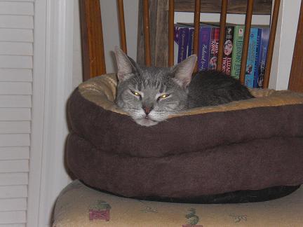 demon cat on energy saving mode- - small
